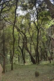 Le plus d'arbres plantés en une heure